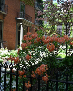 Beacon Hill garden, Boston, Ma.